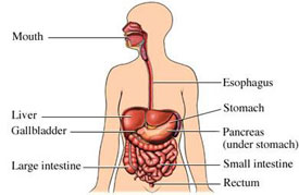ginger and digestion